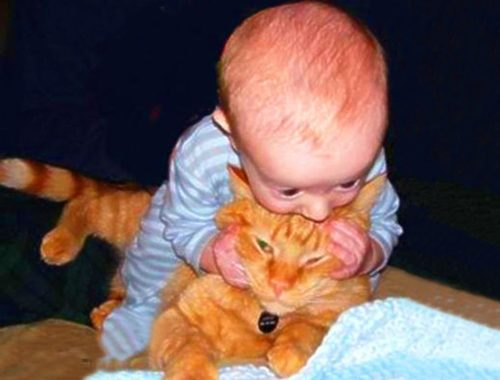 Cutest Baby and Cats Playing Together - Funny Baby Video