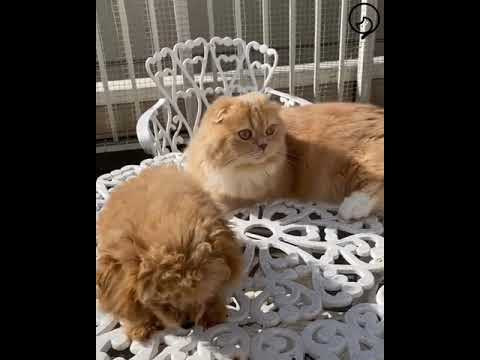 Funny Cats and Cute Kittens Will Make Your Day Compilation Part 120