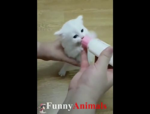 Cute Cats Compilation 8