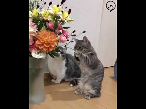 Funny Cats and Cute Kittens Will Make Your Day Compilation Part 123