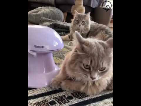 Funny Cats and Cute Kittens Will Make Your Day Compilation Part 124