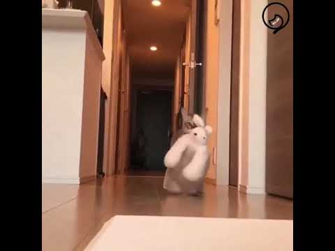 Funny Cats and Cute Kittens Will Make Your Day Compilation Part 125