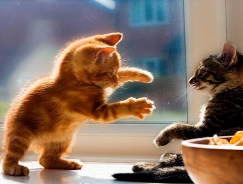 Funny and Cute Kittens videos 2019 - Funny Kitten Cats compilation