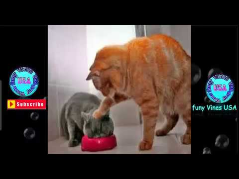 funny cat videos try not to laugh-cute kitten-cute kittens videos compilation 2018-funny cat videos