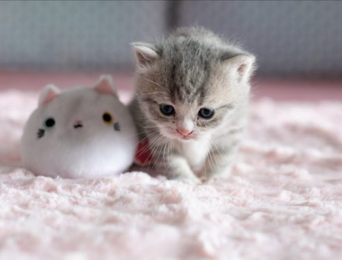 That's Why We Love Cats & Kittens #1   Cutest And Funniest Kitten videos