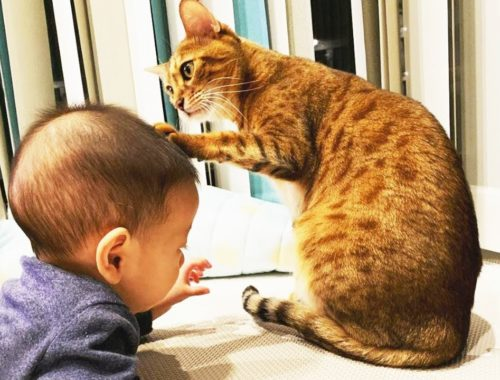 Cute Cats Annoying Babies - Best Cats And Baby Videos