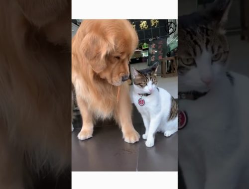 Cute Cats with their best friends