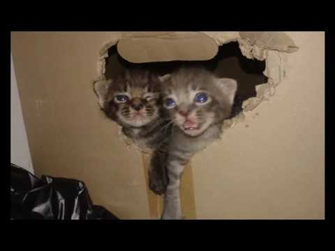 Cute Kittens adventure- Song: Young Lion, Vampire Weekend