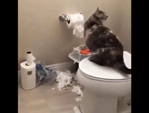 funny cat videos 2019 youtube - funny and cute kittens videos 2019 - funny kitten cats compilation 1