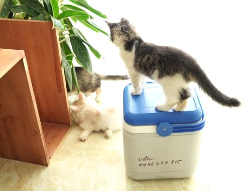 Injection for cats funny -  Cute kitten  🙀😘😍