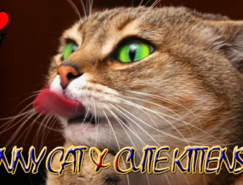 The Funny Cat & Cute Kittens Fail Videos - Funny Kitty Cat Video Compilation [SV Life]