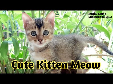 "Cute Kitten ""Meow"" 