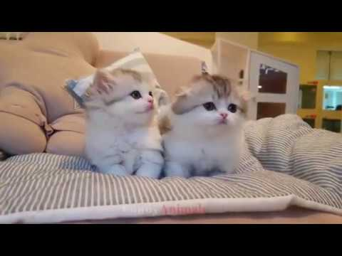 Cats/cute and funny  kittens with their huge collection/compilation