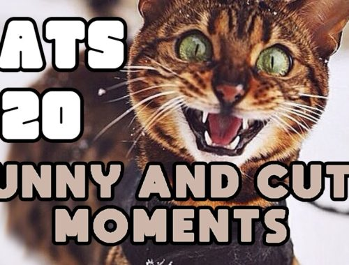 Let it Snow! 😺 CATS 🐾 Funny and cute moments Ep.20