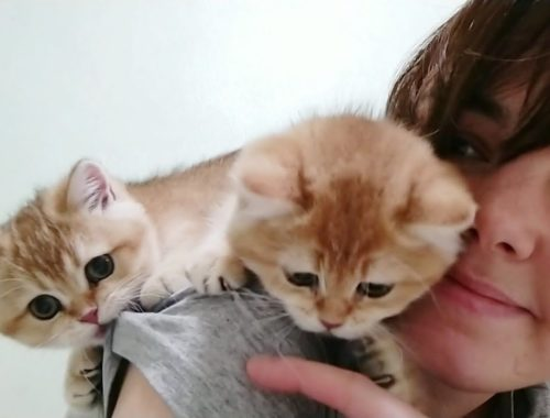 🐈 Cute Kittens are Played on My Back