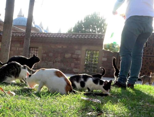 I fed cats at sunrise (Cute Cats - Cute Kittens)