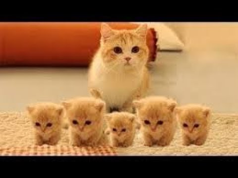 Many Cute Kittens Are Very Funny