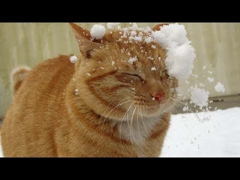 HAPPY Cats 😺 vs Snow -  Cute Cat doing Funny 😸 things in Snow | Funny Cat videos 2019