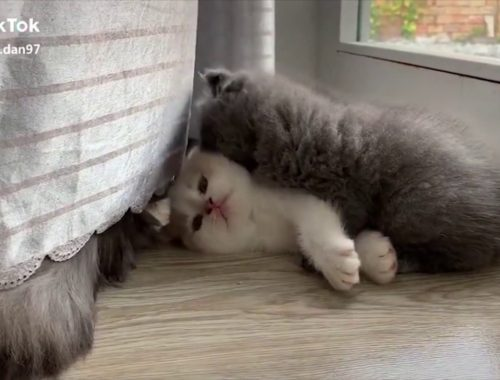😍 Supper Cute Kittens In The World #1 - Video Hay