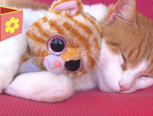 Cute Cat part two | Video for children and toddlers | Bellboxes |  Funny cat Simba aww   part 2