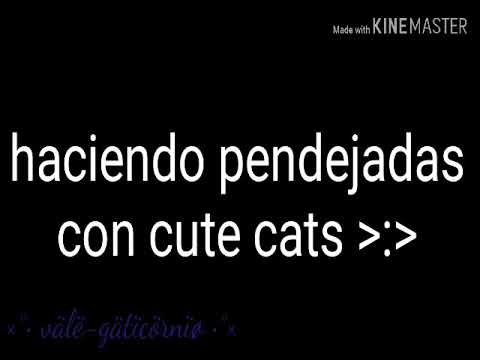 •× haciendo desmadre con cute cats xd ו