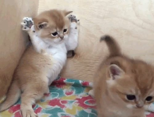 The Cutest Kittens Will Make Your Day Brighter