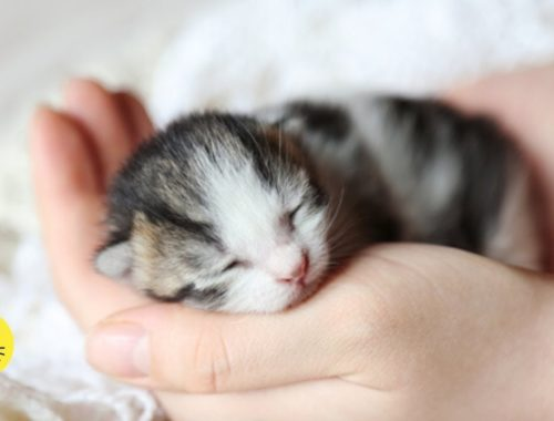 Cute Newborn Kittens And Baby Cat Videos Ever (2019)