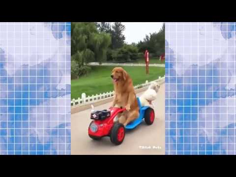 Funny and Cute Dog and Cat Compilation ✪ Tik Tok Pets # 9