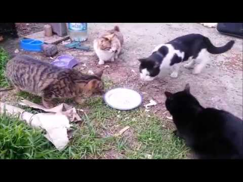 Cute Cats in Cat Neighborhood - Eeating, Drinking, Playing - Cats World