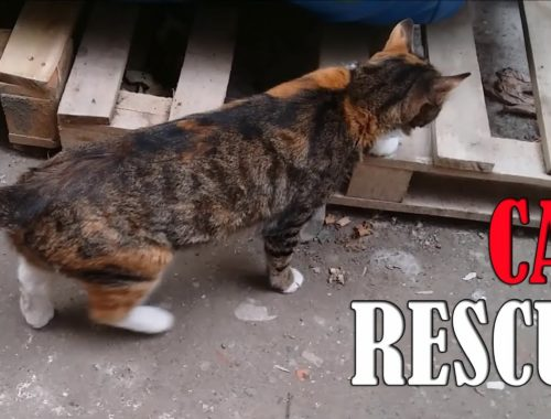 Cat Rescue Operation - (Adorable Kittens - Cute Cats)