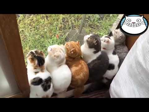 Funny Cats Video🐱 Best Cute Cats❤️ The Most Funny Cats Video