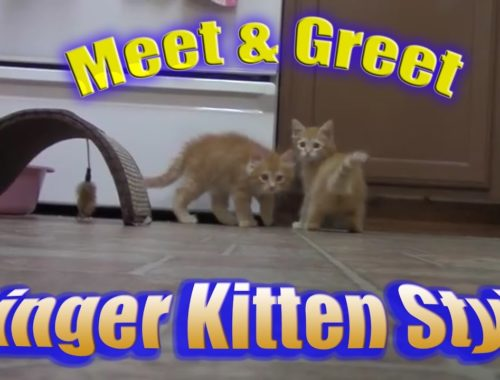 Adorable, Cute Kittens React To Meeting Each Other