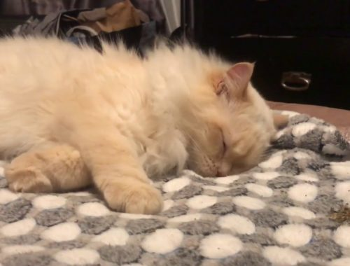 Cute Cats COMPILATION [12]
