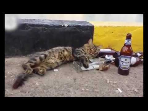 Funny Videos Of Cute Cats - Best! I can't stop laughing ))
