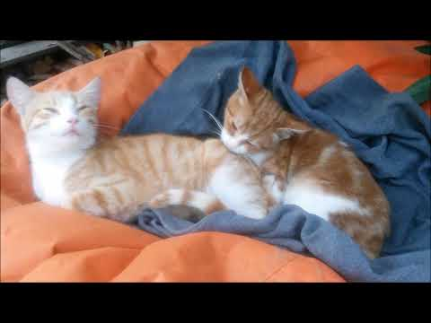 Little Kitten with her sister - She is cleaning her sister - Cute Kittens