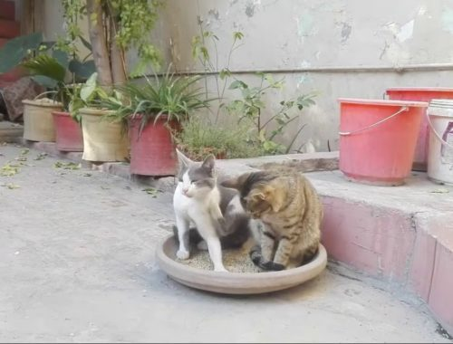 Cute Cats and Kittens Doing Funny Things