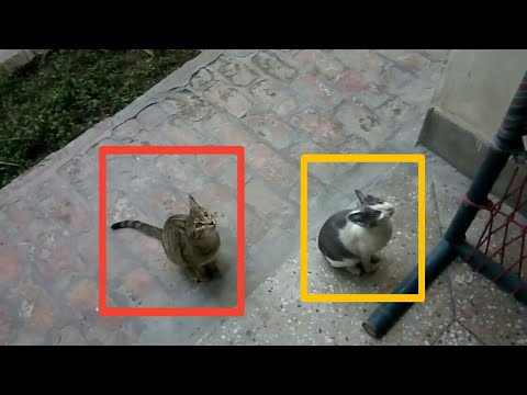 Cute Kittens Doing Funny Things