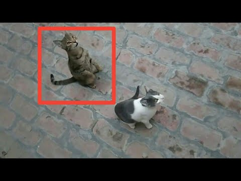 Cute Cats and Kittens Doing Funny Things | Hungry Cute Cats