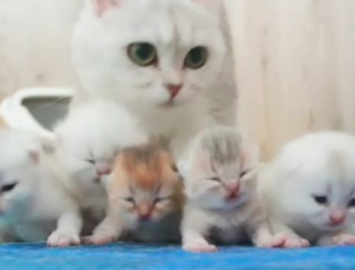 So Many Cute Kittens Videos Compilation - Try Not To Say Aww!