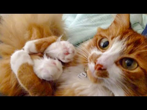 🤣 Funniest and Cutest 😻 Cats and Dogs 🐶 - Funny Pet Animals' Life