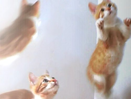 Cute Jumping Baby Kittens