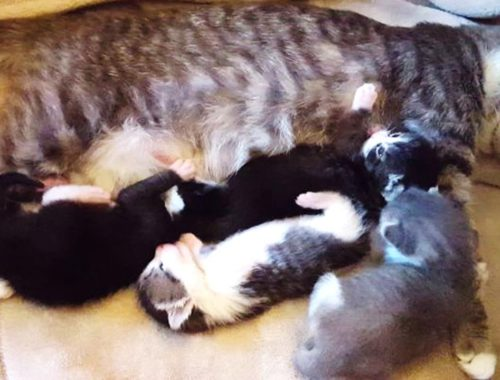 Rescue Young Mom Cat Give Birth Super Cute Tiny Newborn Kittens