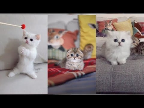 kittens | Cute and Lovely Kittens - Cute Clips Compilation #11  [ tik tok ]