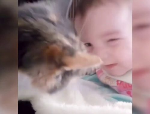 Funny and Cute💗 Kittens Video 2019 #2
