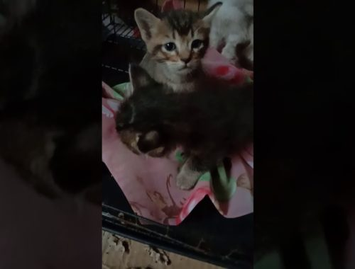 😍😍😍hello there..cute kittens.. Bed 🛀 time..