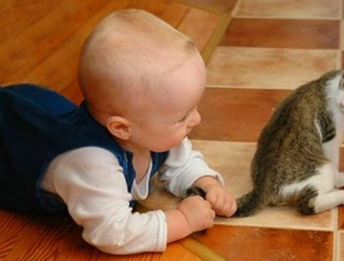 Cute Kittens and Babies Playing Together Compilation
