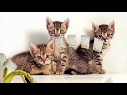 Ultimate Cute Cats Compilation 2019   Funny Pet Videos BANANA