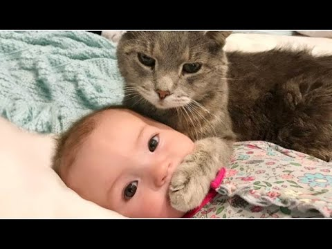 Cute Cats videos & funny cats videos Best Cats meowing videos new videos funny cats 2019