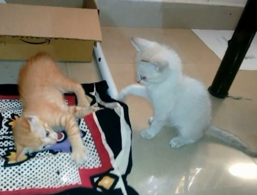Cute Kittens Playing Together