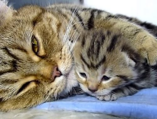 Mama Cat Playing With Cute Kittens Compilation 2018